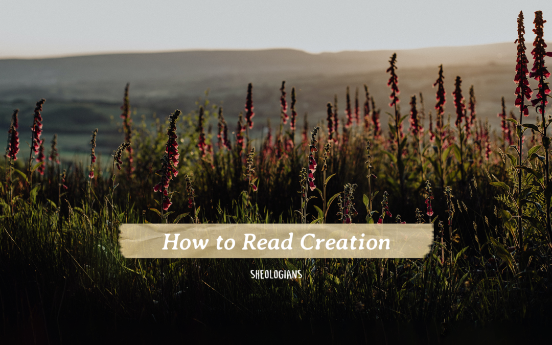 How to Read Creation